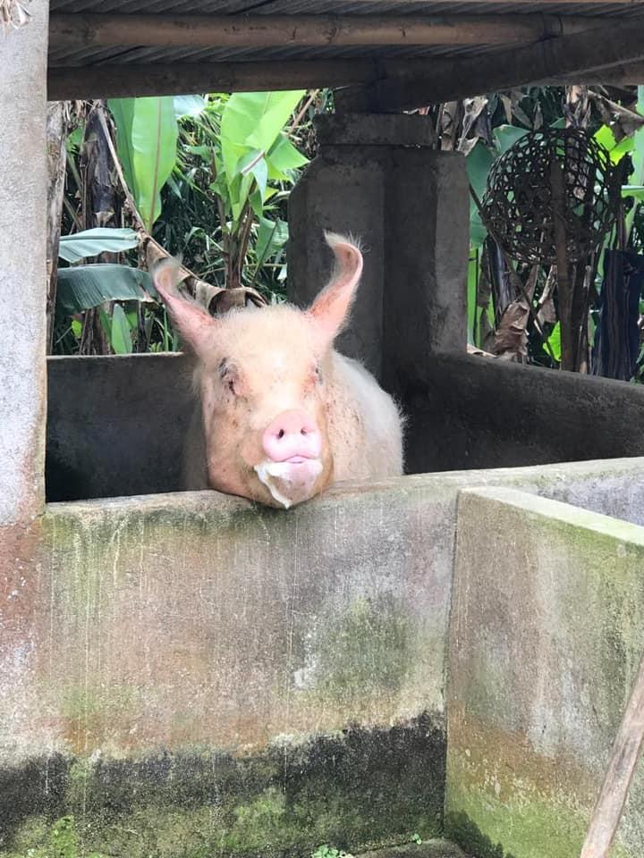 Bali pig - Bali yoga retreat with Eastside Yoga and Pilates
